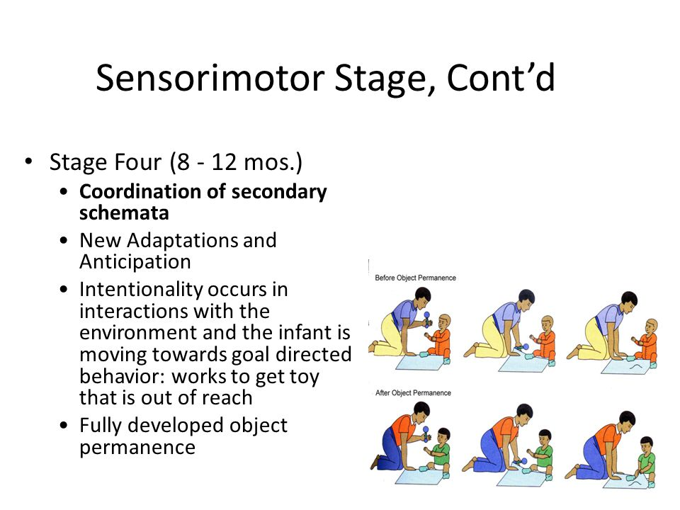 Sensorimotor Stage, Cont'd
