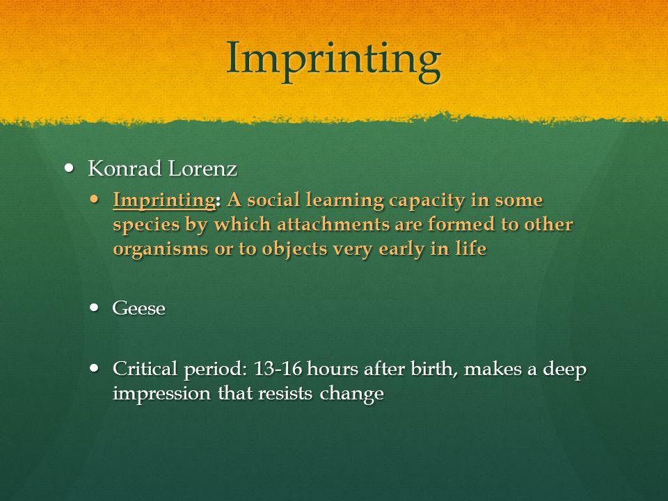 Imprinting Konrad Lorenz
