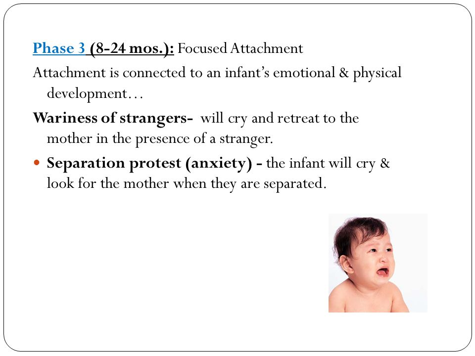 Phase 3 (8-24 mos.): Focused Attachment