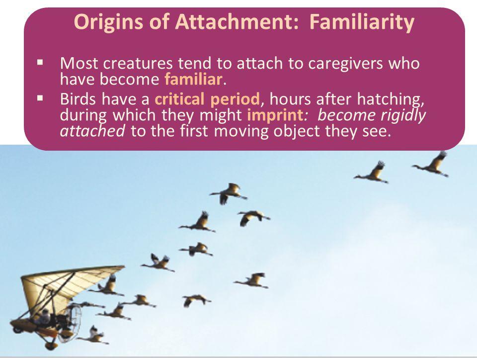 Origins of Attachment: Familiarity