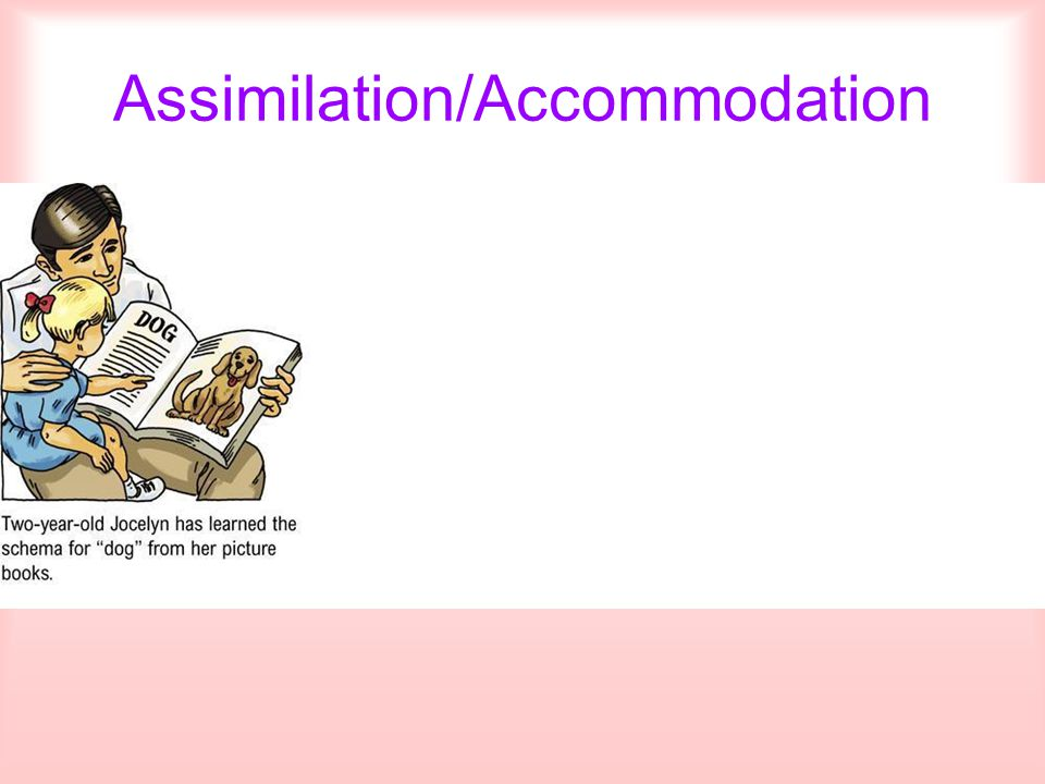 Assimilation/Accommodation