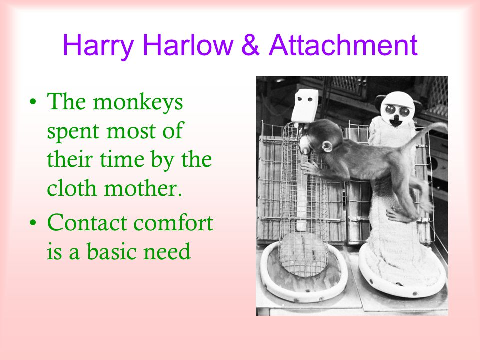 Harry Harlow & Attachment