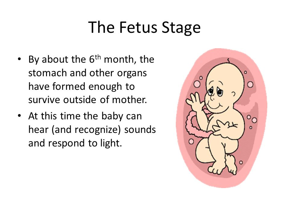 The Fetus Stage By about the 6th month, the stomach and other organs have formed enough to survive outside of mother.