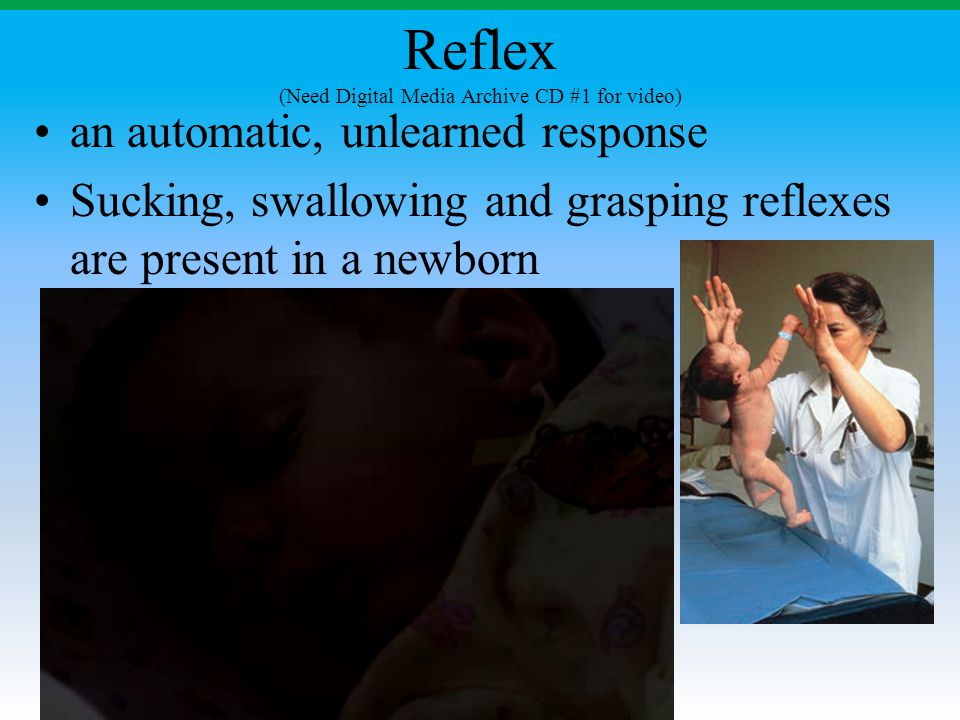Reflex (Need Digital Media Archive CD #1 for video)