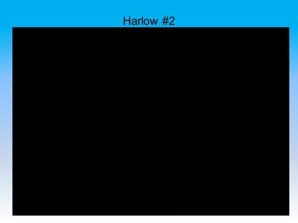 Harlow #2
