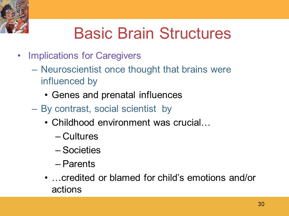 Basic Brain Structures