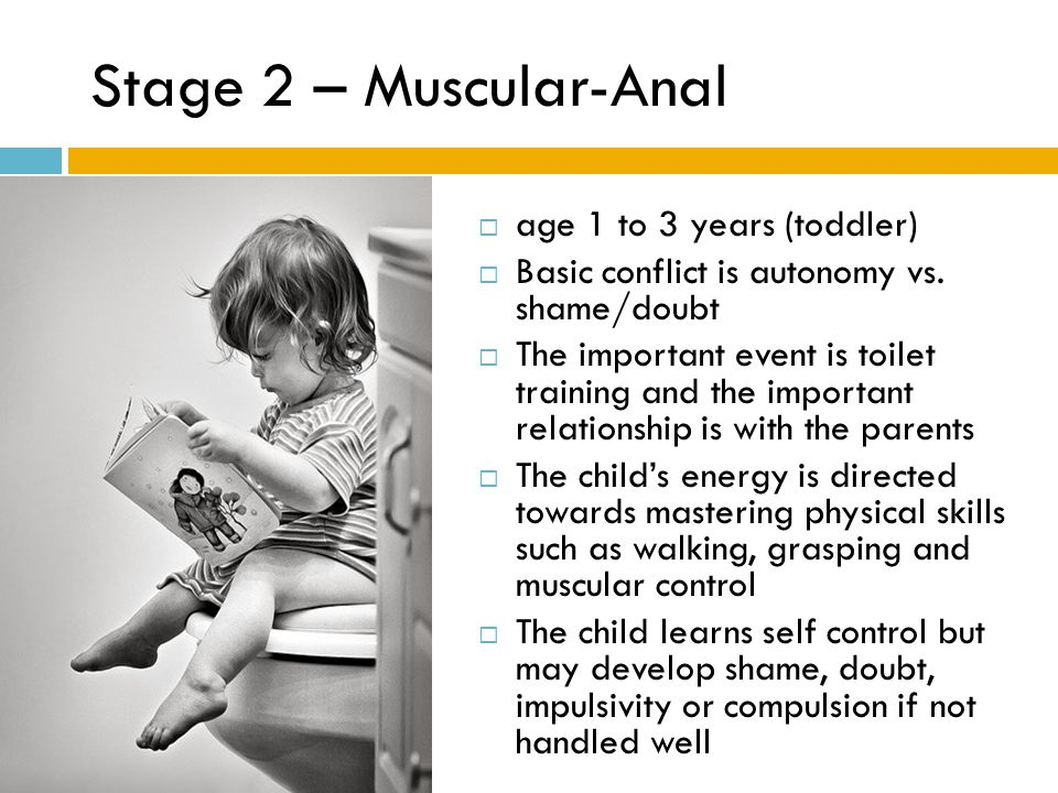 Stage 2 – Muscular-Anal age 1 to 3 years (toddler)