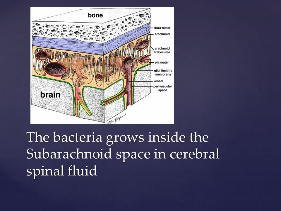 The bacteria grows inside the Subarachnoid space in cerebral spinal fluid