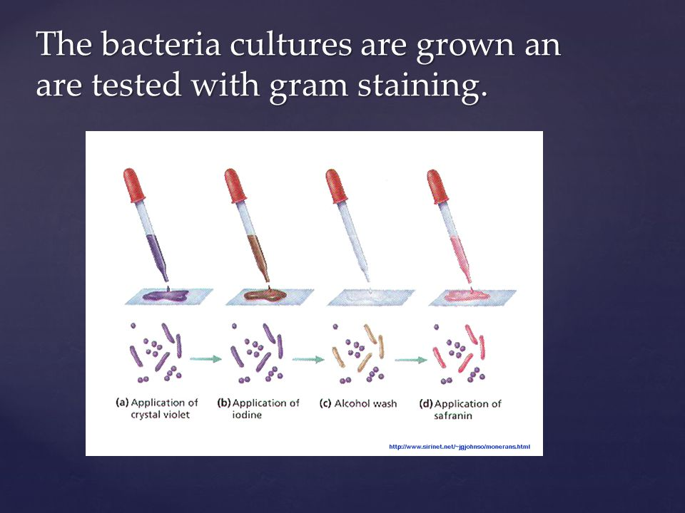 The bacteria cultures are grown an are tested with gram staining.