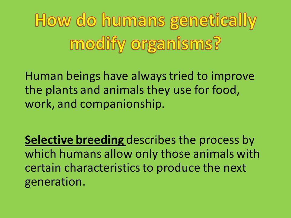 How do humans genetically modify organisms