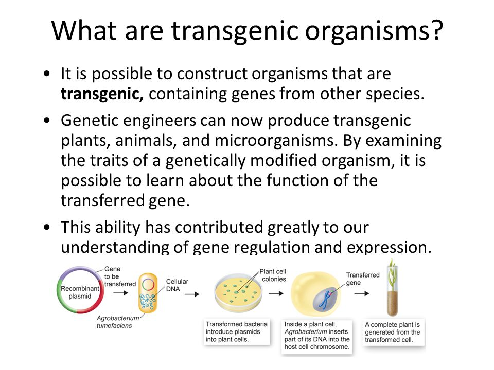 What are transgenic organisms