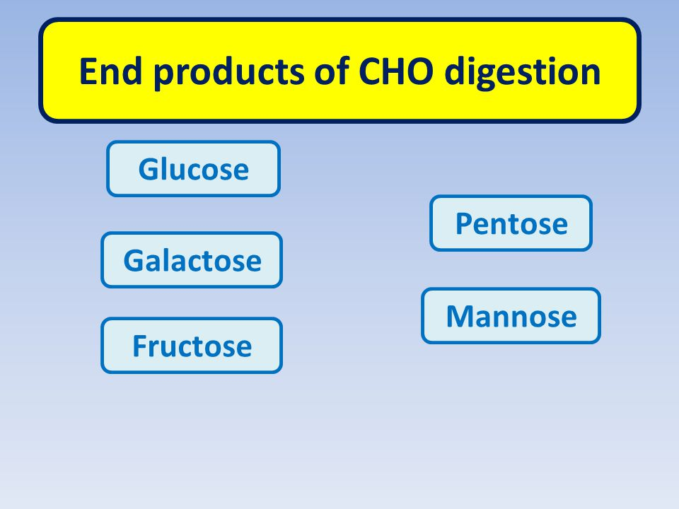 End products of CHO digestion