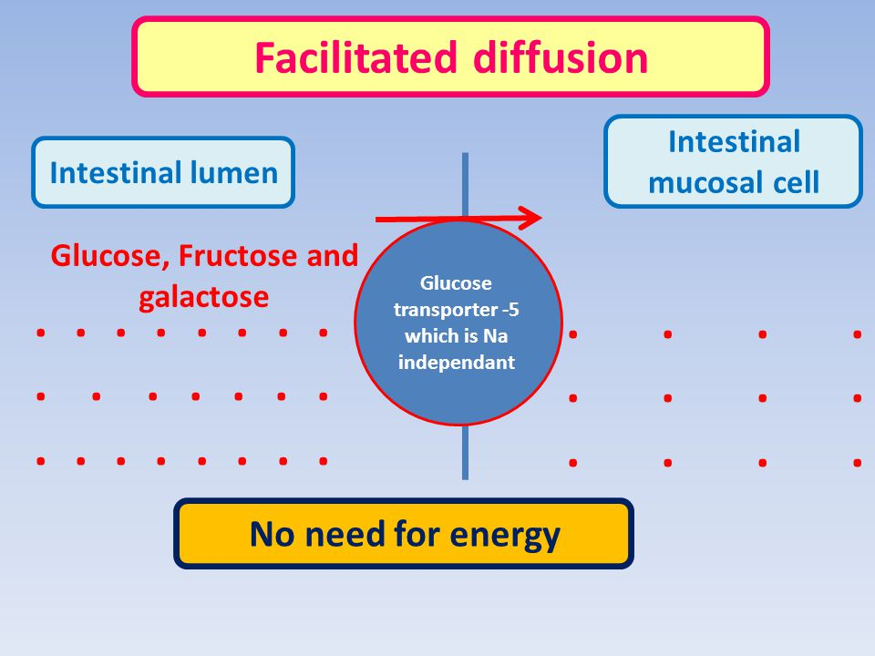 . . . . . . . . . . . . . . . . . . . Facilitated diffusion