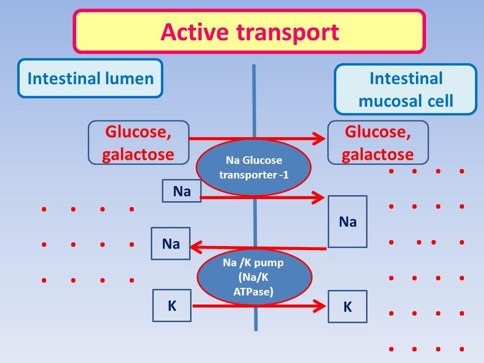 Active transport Intestinal lumen. Intestinal mucosal cell. Glucose, galactose. Glucose, galactose.