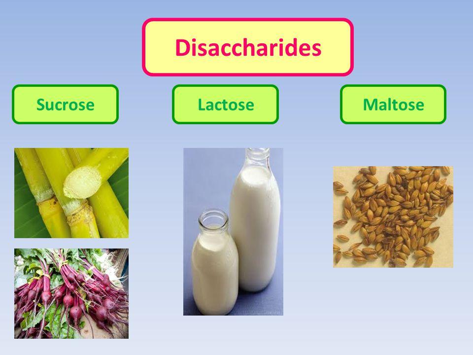 Disaccharides Sucrose Lactose Maltose