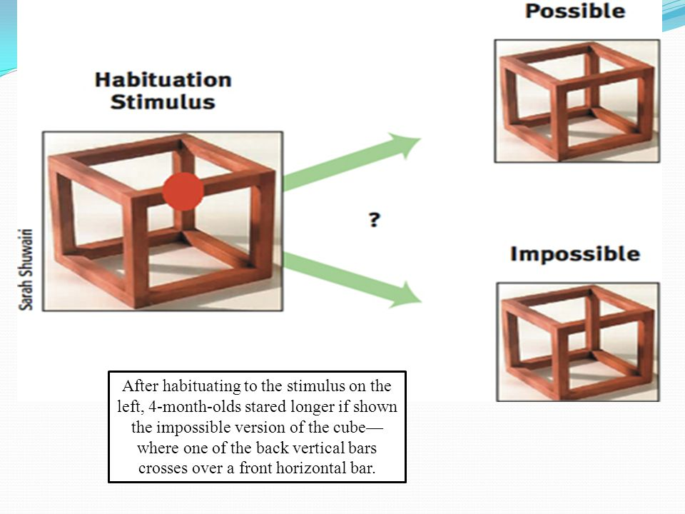 After habituating to the stimulus on the left, 4-month-olds stared longer if shown the impossible version of the cube—where one of the back vertical bars crosses over a front horizontal bar.