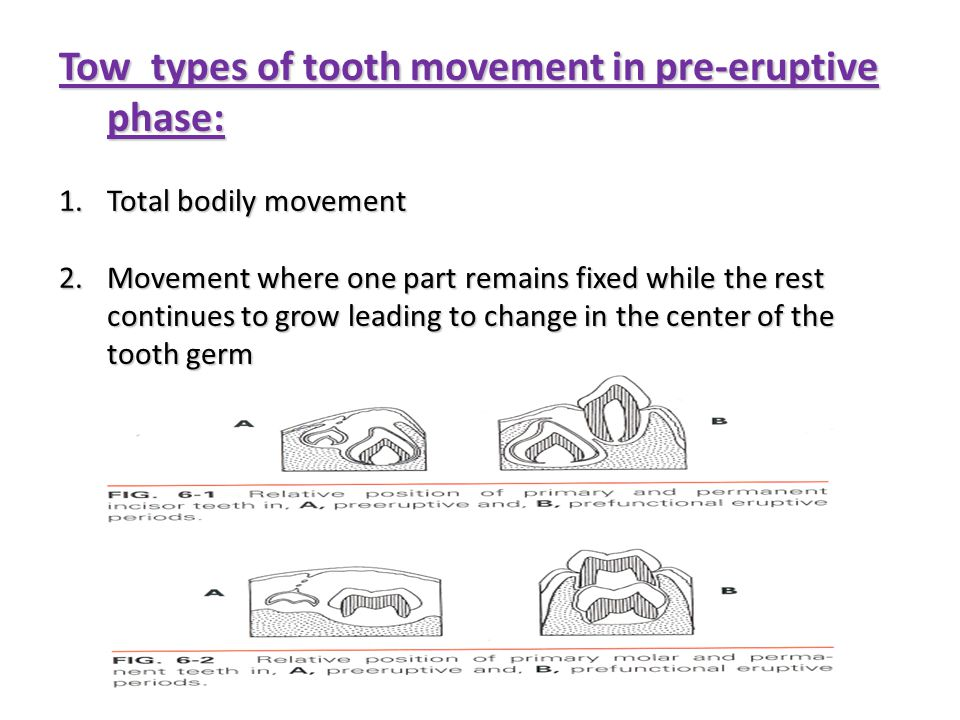 Tow types of tooth movement in pre-eruptive phase: