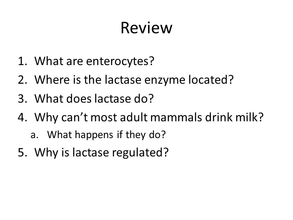 Review What are enterocytes Where is the lactase enzyme located