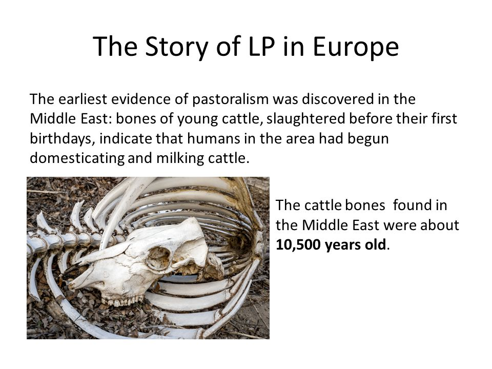 The Story of LP in Europe