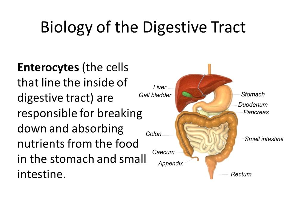 Biology of the Digestive Tract