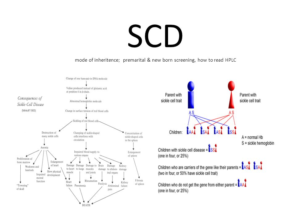 SCD mode of inheritence; premarital & new born screening, how to read HPLC