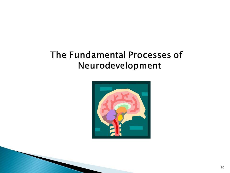 The Fundamental Processes of Neurodevelopment