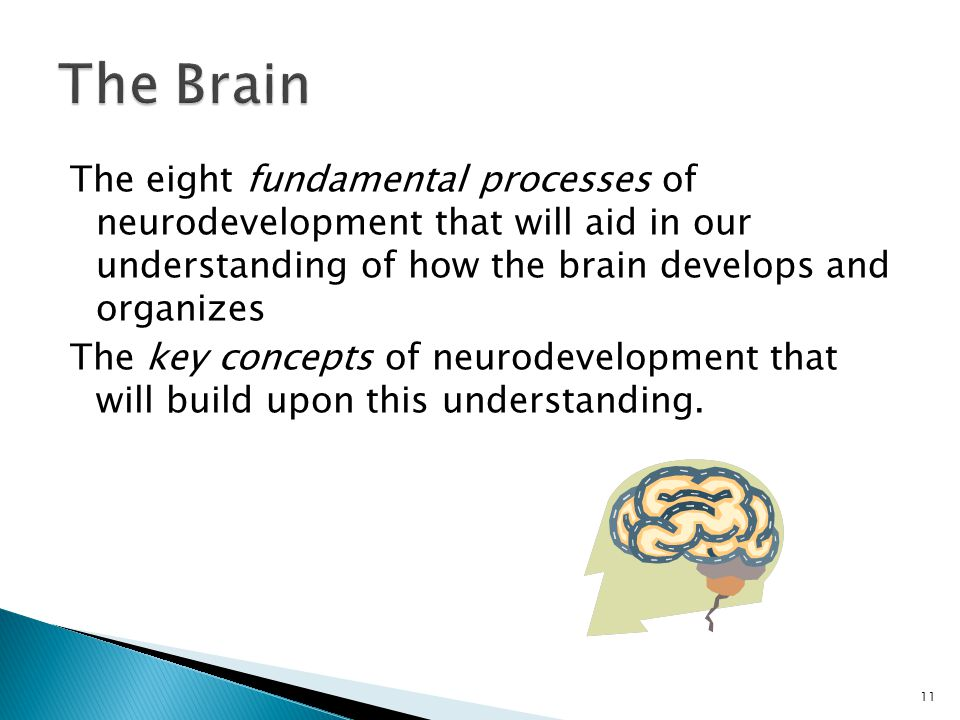 The Brain The eight fundamental processes of neurodevelopment that will aid in our understanding of how the brain develops and organizes.