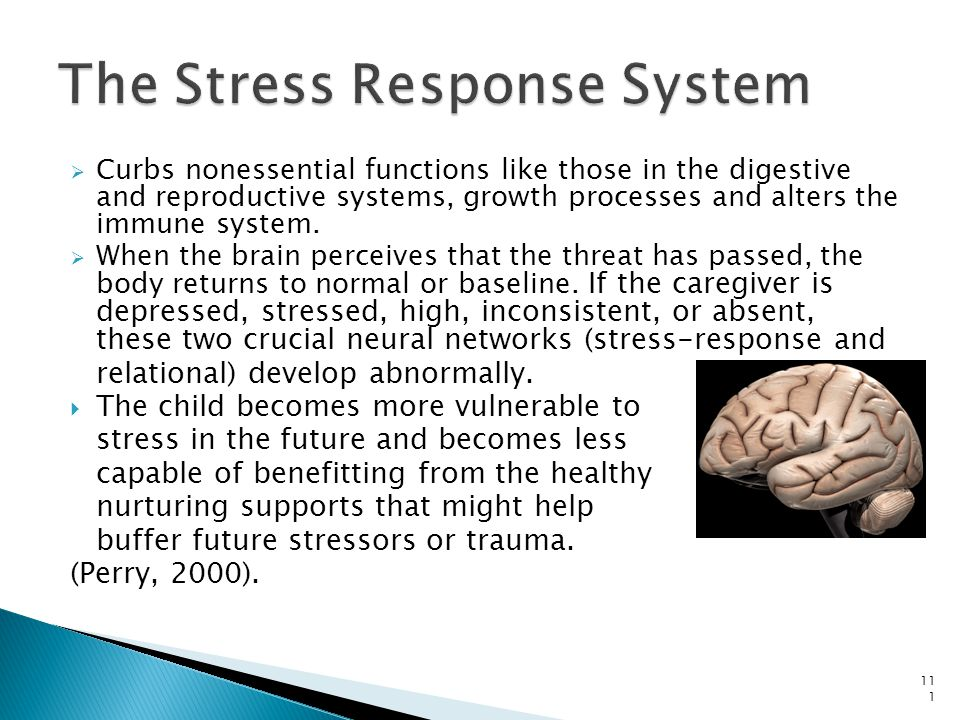 The Stress Response System