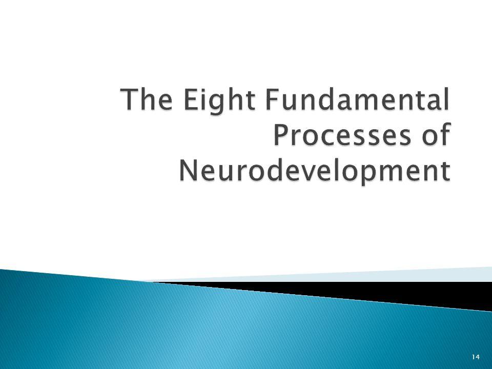 The Eight Fundamental Processes of Neurodevelopment