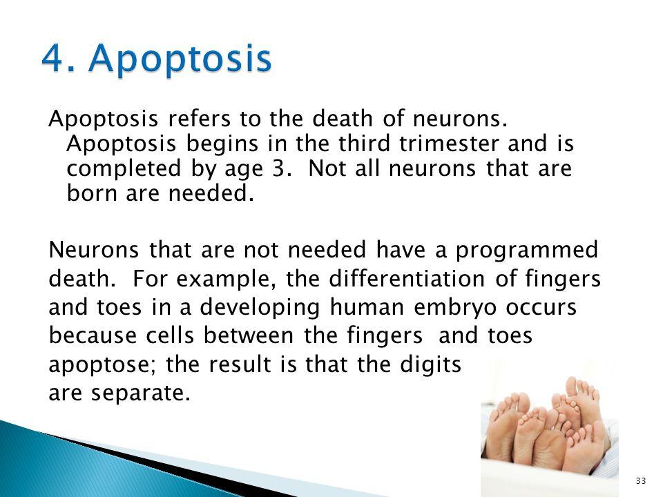 4. Apoptosis