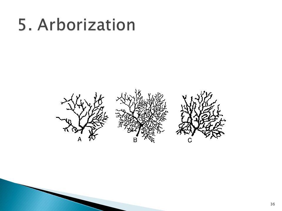 5. Arborization