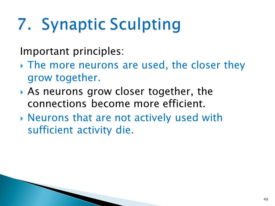 7. Synaptic Sculpting Important principles: