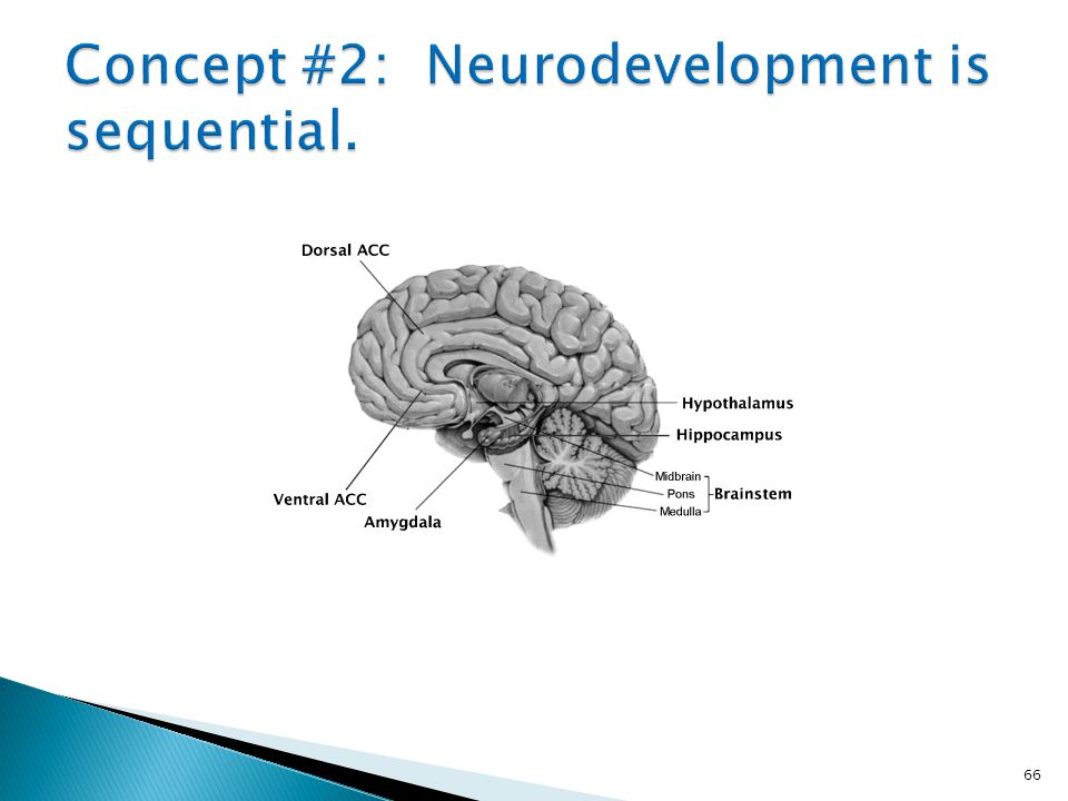 Concept #2: Neurodevelopment is sequential.