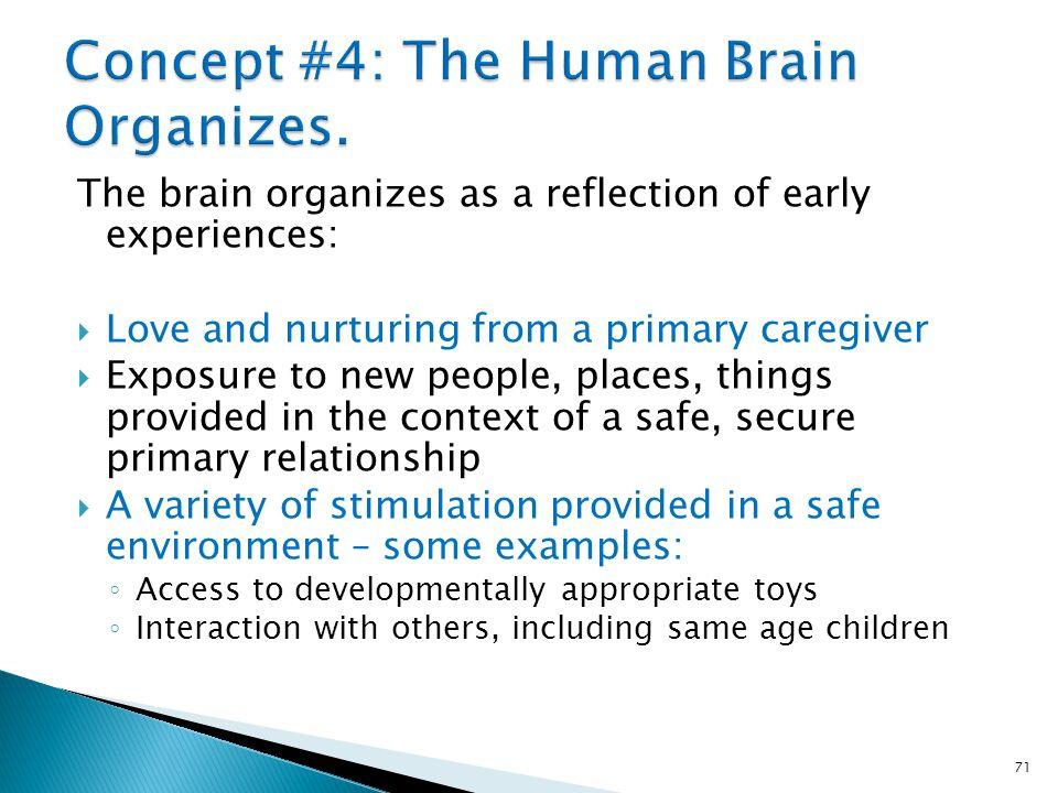 Concept #4: The Human Brain Organizes.