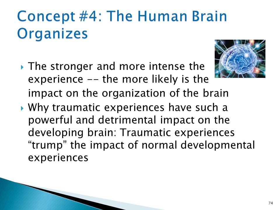 Concept #4: The Human Brain Organizes