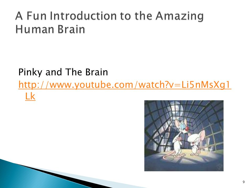 A Fun Introduction to the Amazing Human Brain
