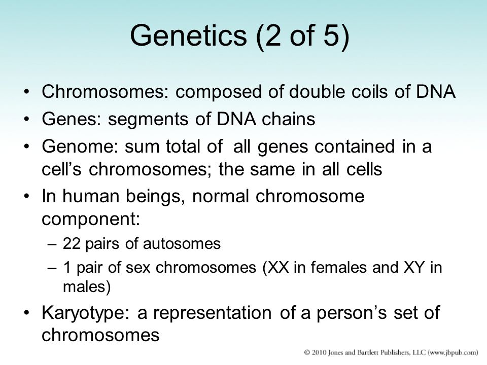 Genetics (2 of 5) Chromosomes: composed of double coils of DNA