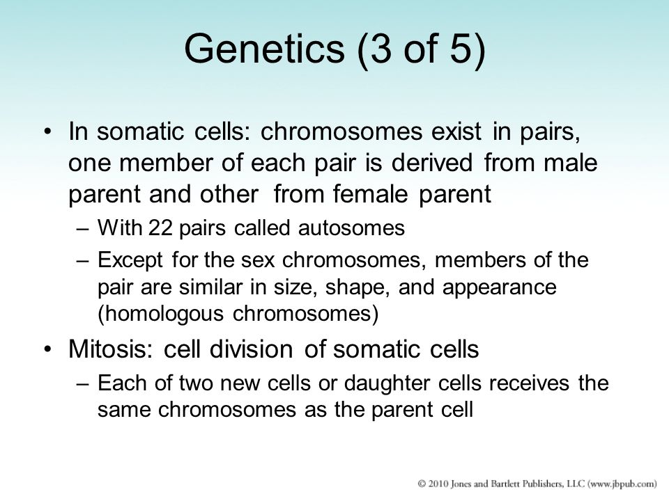 Genetics (3 of 5) In somatic cells: chromosomes exist in pairs, one member of each pair is derived from male parent and other from female parent.