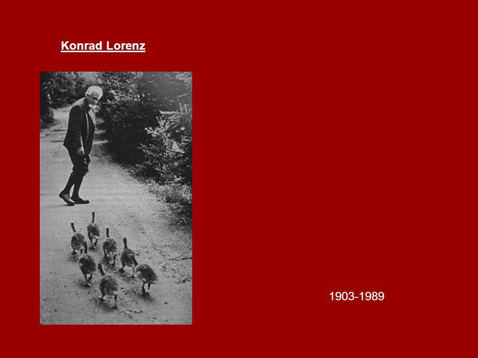 Konrad Lorenz 1903-1989