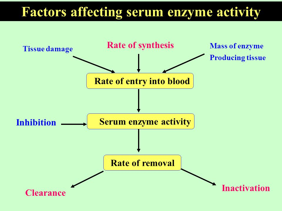 factors affecting the rate of enzyme activity A bbc bitesize secondary school revision resource for standard grade biology on enzymes and aerobic respiration: synthesis, degradation, lock and key.