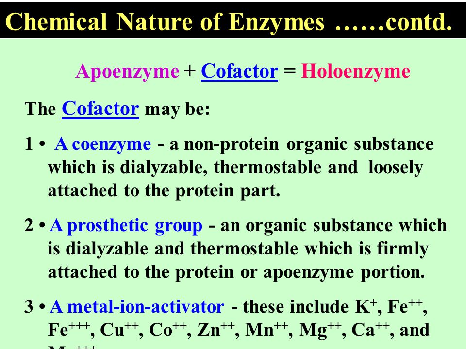 What is the difference between enzyme and co-enzyme