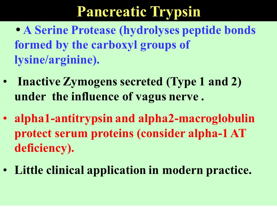 Pancreatic Trypsin  A Serine Protease (hydrolyses peptide bonds formed by the carboxyl groups of lysine/arginine).