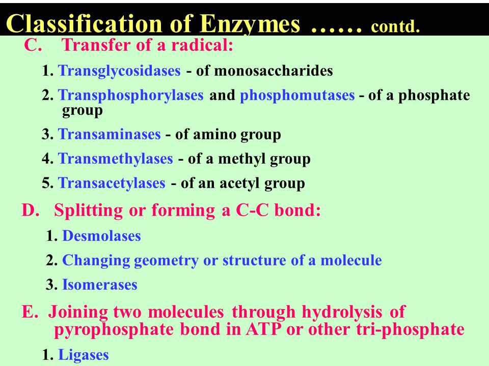 Classification of Enzymes …… contd.