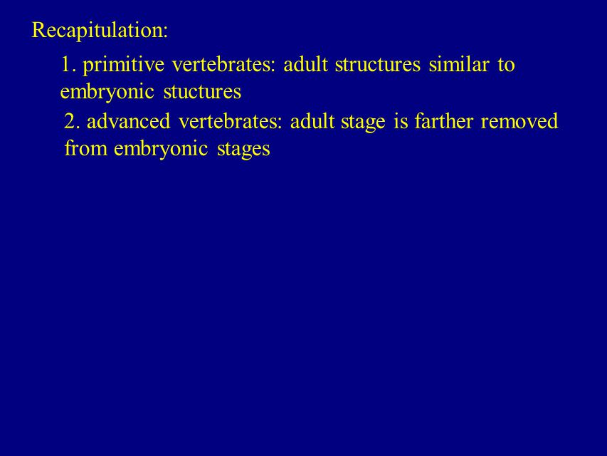 Recapitulation: 1. primitive vertebrates: adult structures similar to embryonic stuctures.