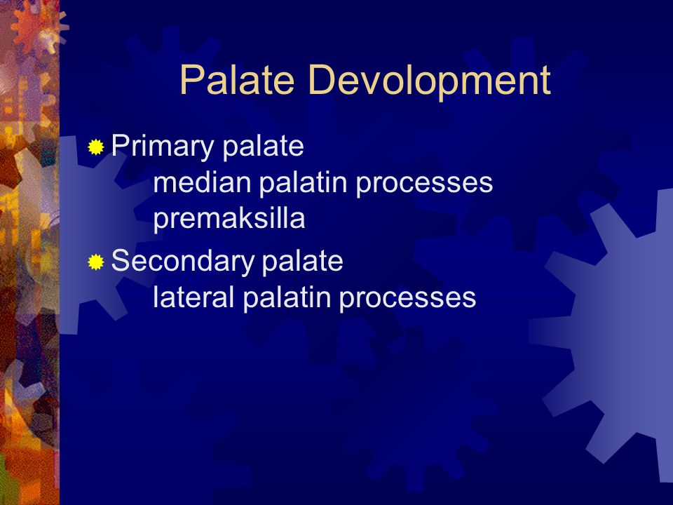 Palate Devolopment Primary palate median palatin processes premaksilla