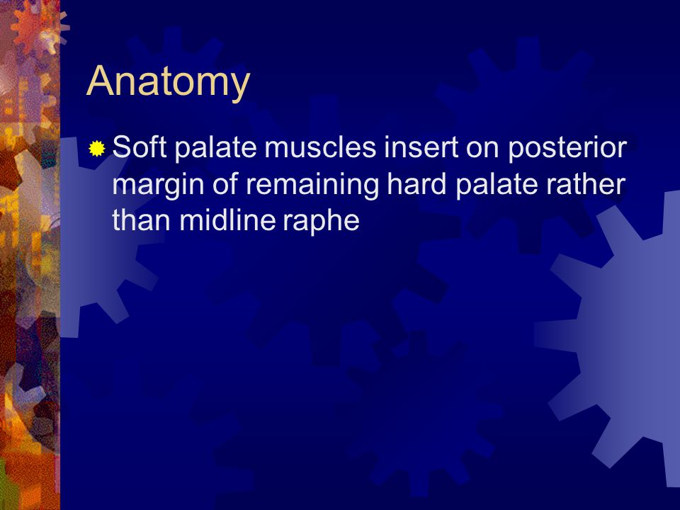 Anatomy Soft palate muscles insert on posterior margin of remaining hard palate rather than midline raphe.