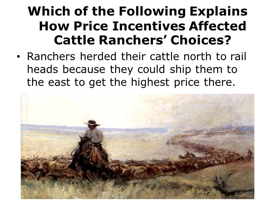 Which of the Following Explains How Price Incentives Affected Cattle Ranchers' Choices
