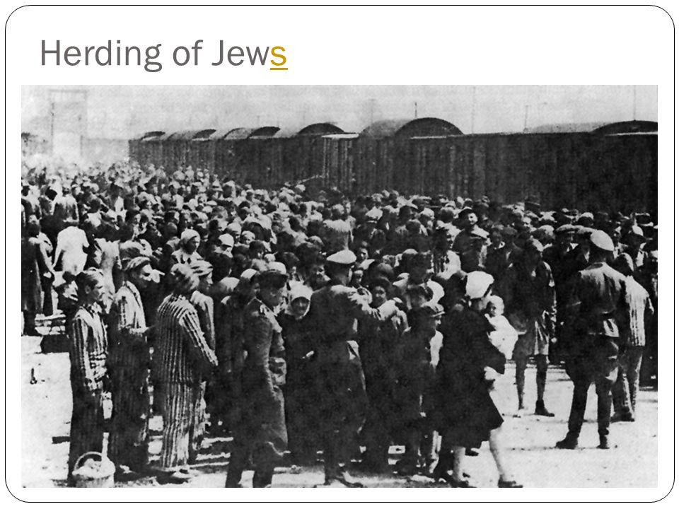 Herding of Jews
