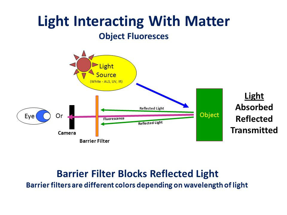 Light Interacting With Matter