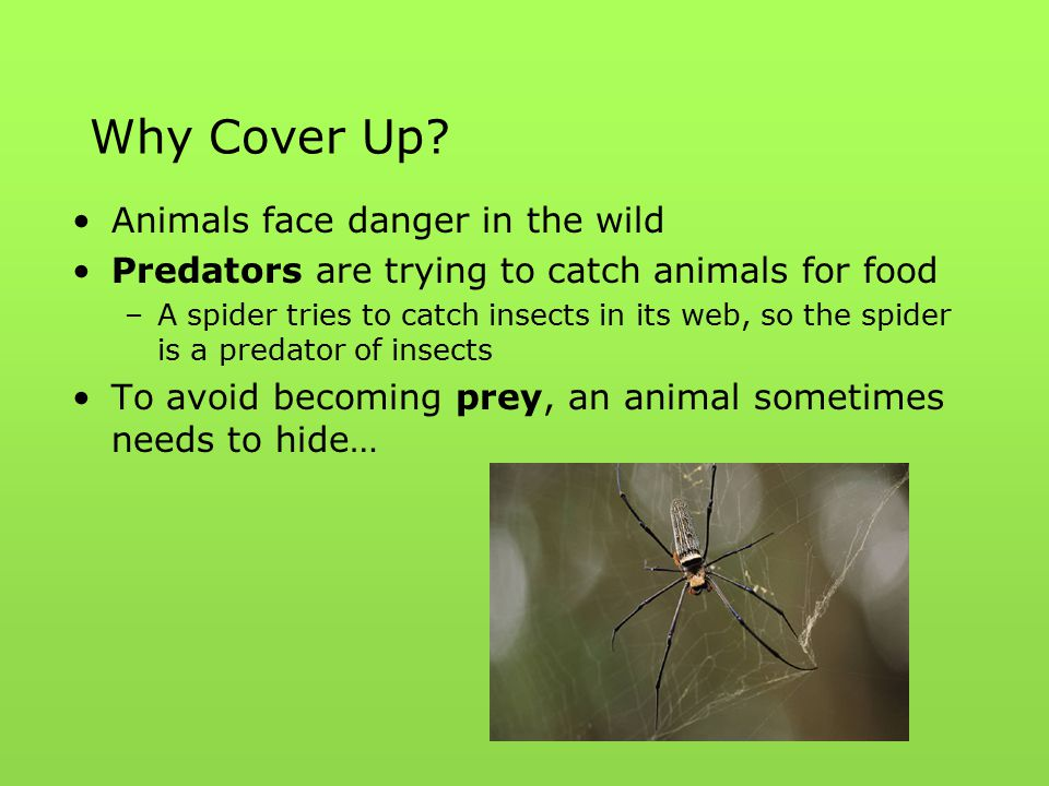Why Cover Up Animals face danger in the wild